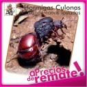 Hormigas Culonas Santandereanas Tostadas 1 Kilo