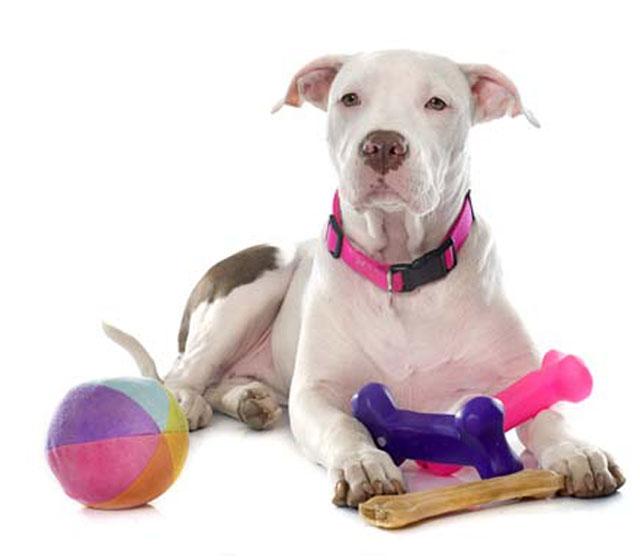 juguetes mascotas bolas, pelota, mordedores