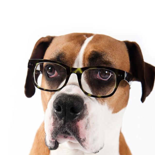 los ojos de tu mascota tienen poder